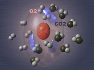 CO2 Molecules